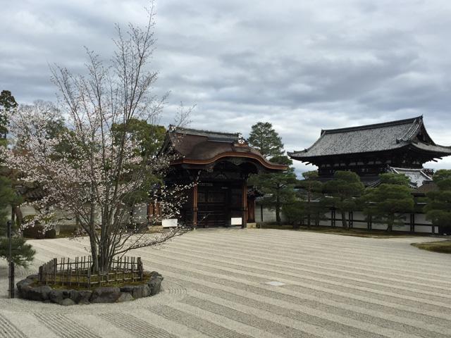 japan,sakura,kyoto,ninnnaji