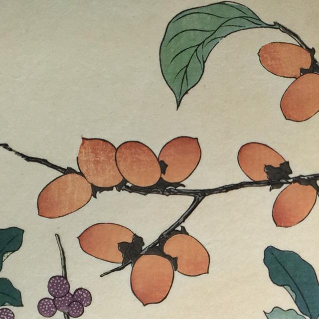 japan,art,sakai hoitsu,flower