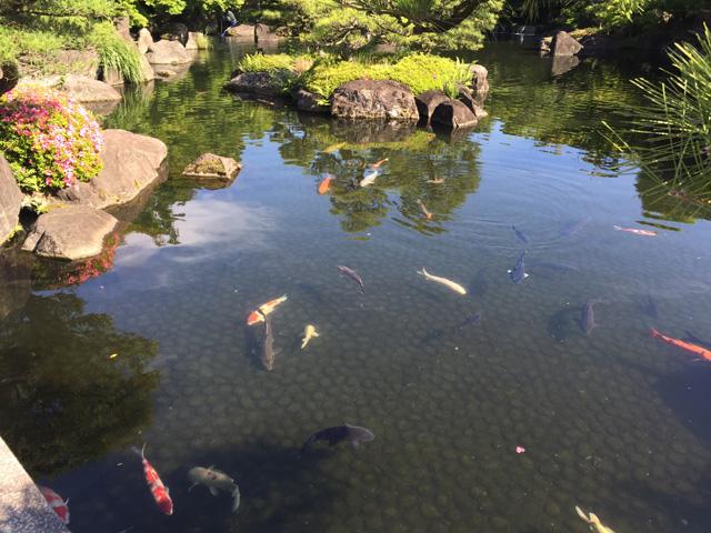 japan, garden, himeji, kokoen