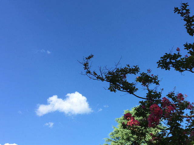 kyoto, shoseien,kikokutei,garden