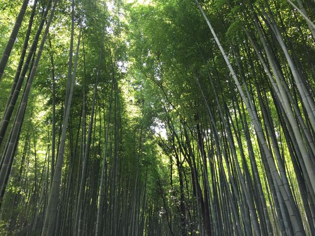 kyoto, arashiyama, bamboo