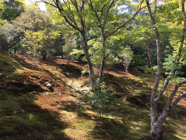 kyoto, tenryu-ji, garden