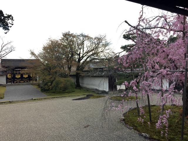 kyoto, daigoji, daigoji-temple, cherry blossom